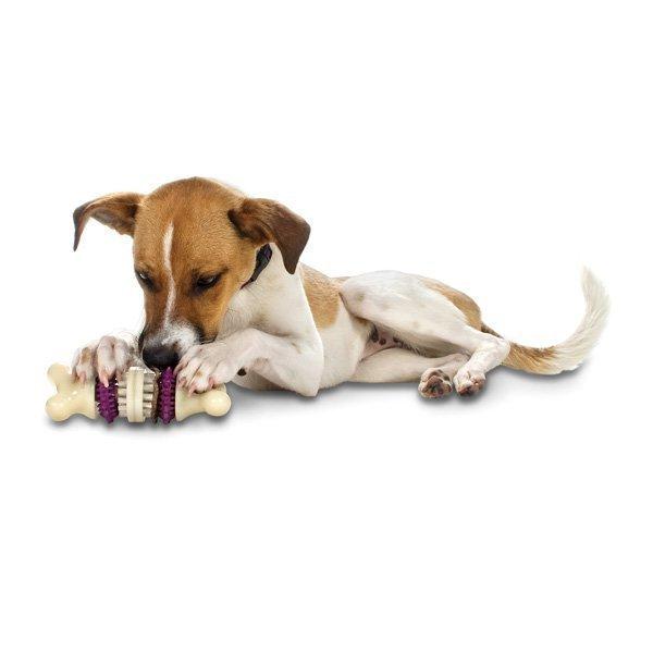 Petsafe BusyBuddy Bristle Bone